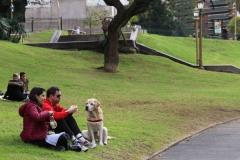 K68A8001-dogs-love-plaza-mitre